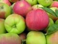 100 tys. t polskich jabłek pojedzie do Wietnamu
